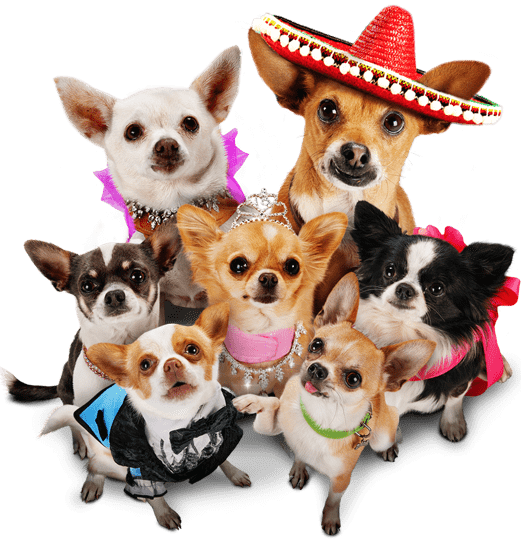 Beverly Hills Chihuahua: Viva La Fiesta in stores on Blu-Ray & DVD today! 9/18 {may include spoilers} #BHC3BloggerDay