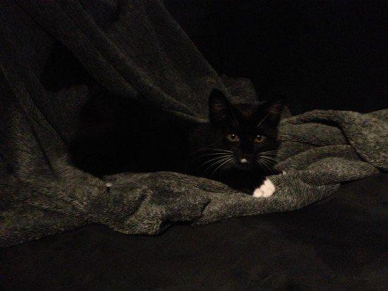 Meet Milo (aka we adopted a kitten!)