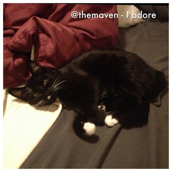 I adore – January Photo a Day #7sDDPhotoaDay