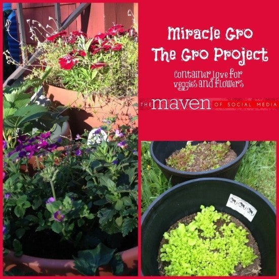 Miracle Gro Collage