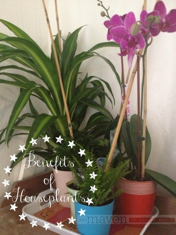 Benefits of Houseplants - The Maven of Social Media®