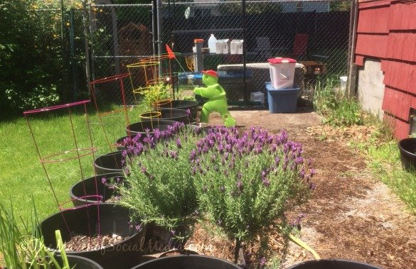 container garden #HomeManagementOnline #ad