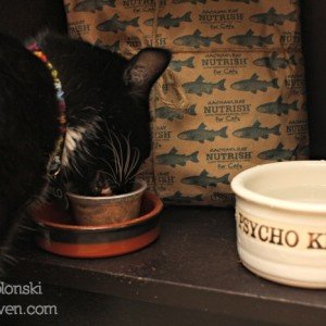 Nutrish for Cats is natural food for cats.