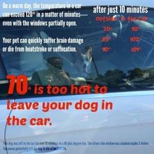 Don't leave your dog in a hot car!