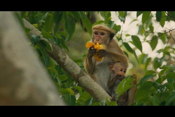 monkeykingdom547fa84e3da1d