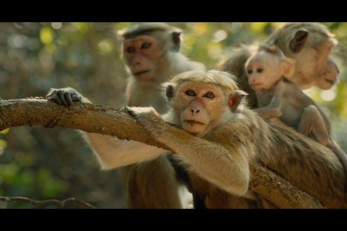 monkeykingdom547fa84e7cbf9