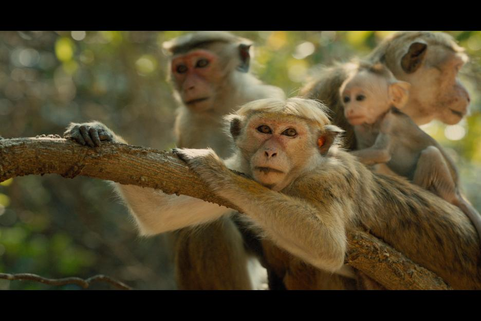 Monkey Kingdom Opens in Theaters Today, April 17th!