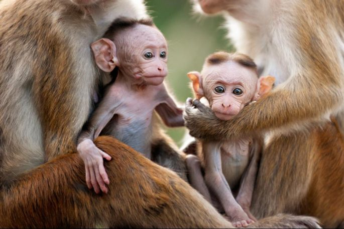 monkeykingdom552f18f7142aa