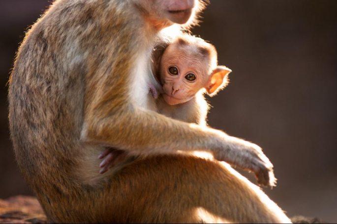 monkeykingdom552f199b446c9