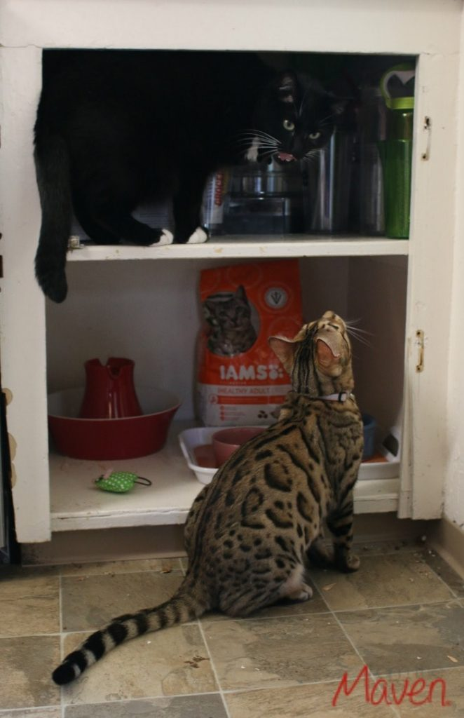 Nixie and Milo in their pet feeding station with Iams #1StopPetShop #ad