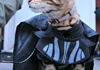 5 Halloween Safety Tips for Pets
