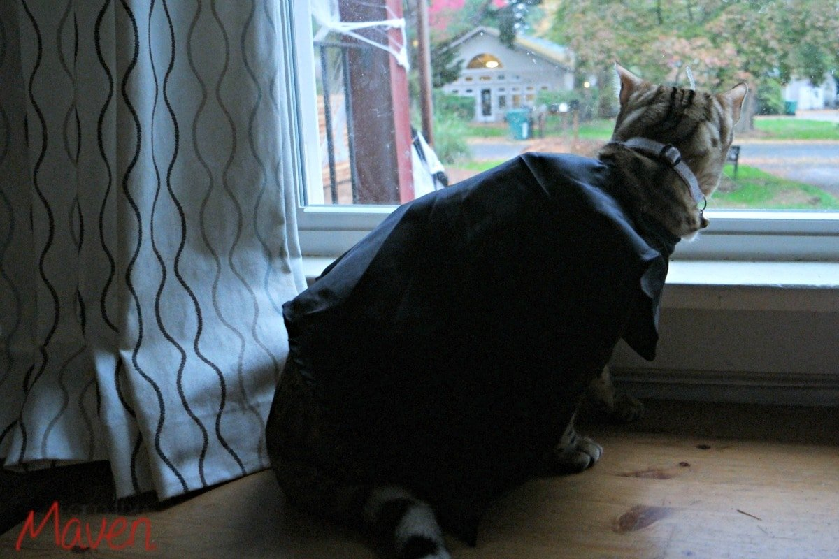 Kitty looking out window.
