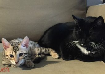 The First Pet: Our Kids and Their Kitties. #ShedHappens