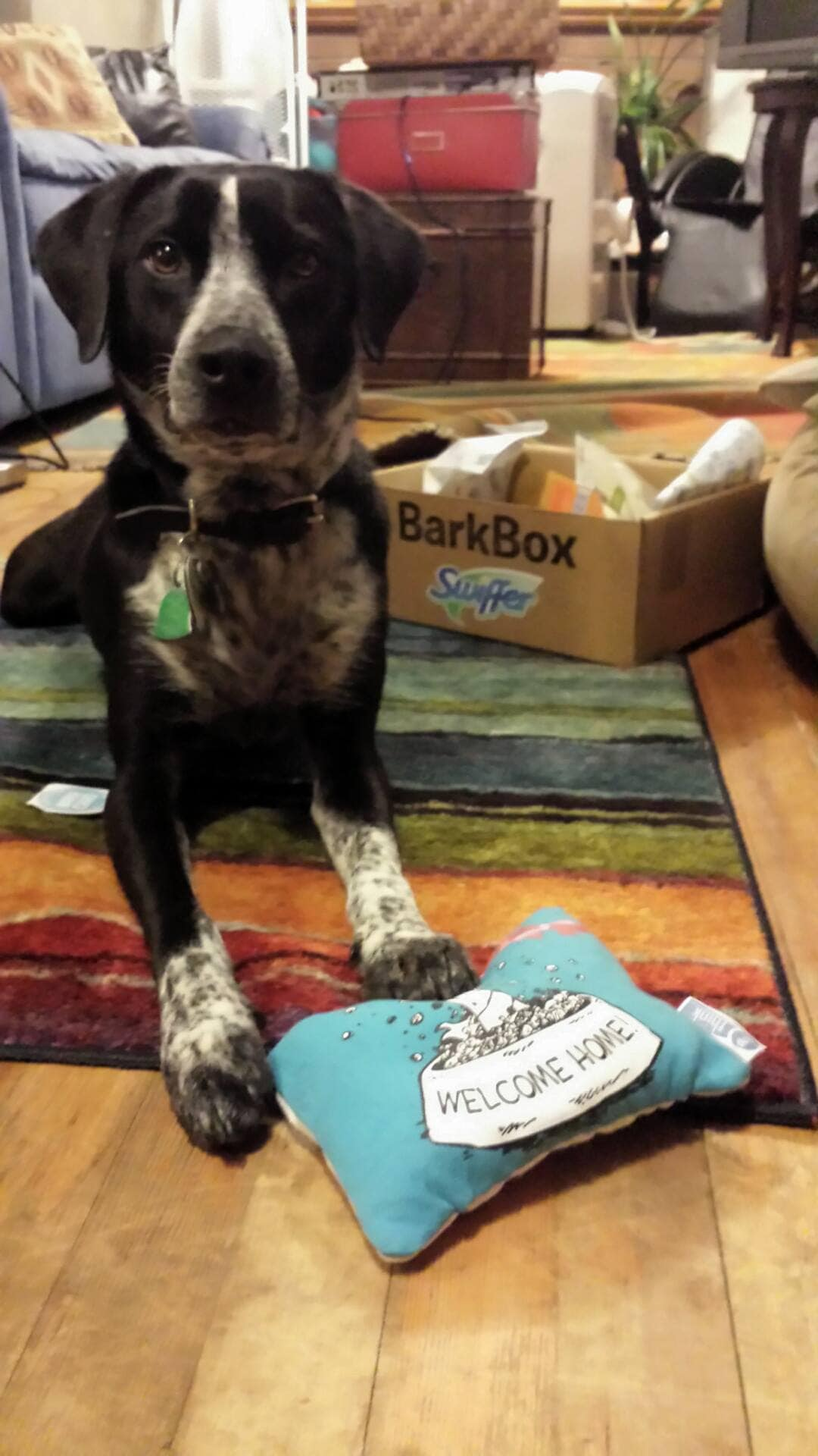 Adopted dog Kyra and her BarkBox