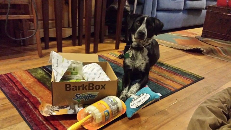 BarkBoxes make great new pet gifts.