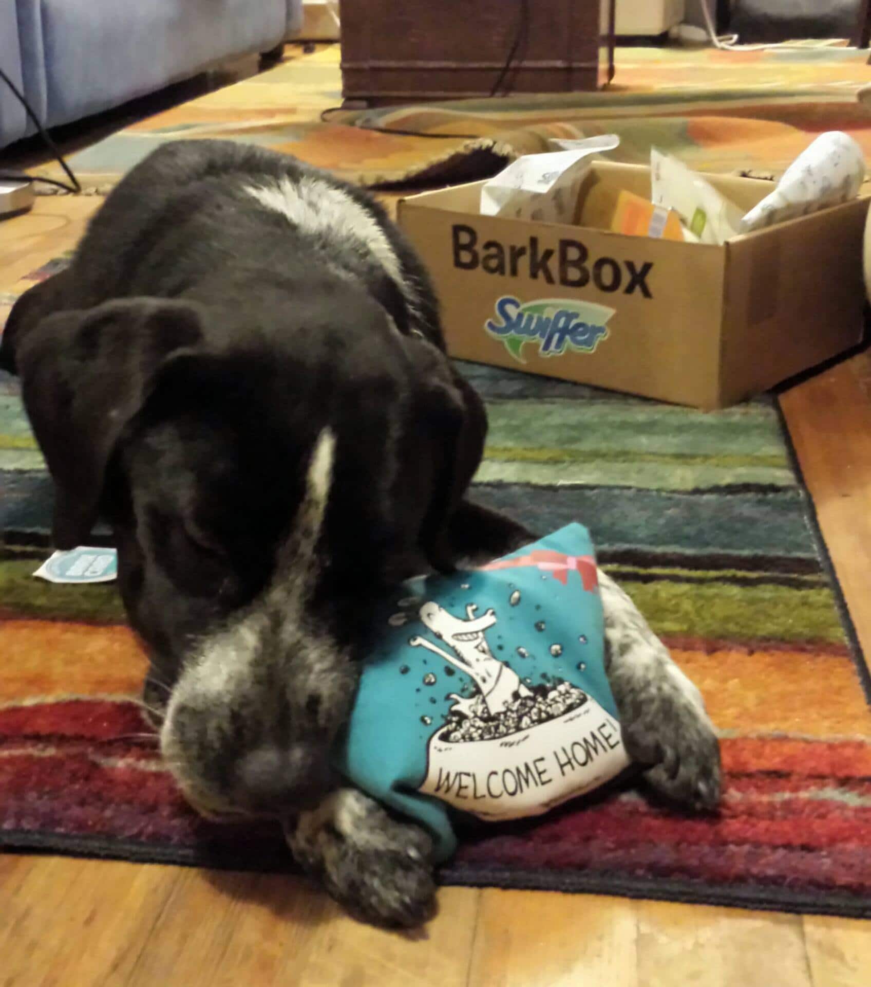 There are toys in BarkBoxes