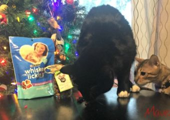 Purina Inspired Pet Gifts