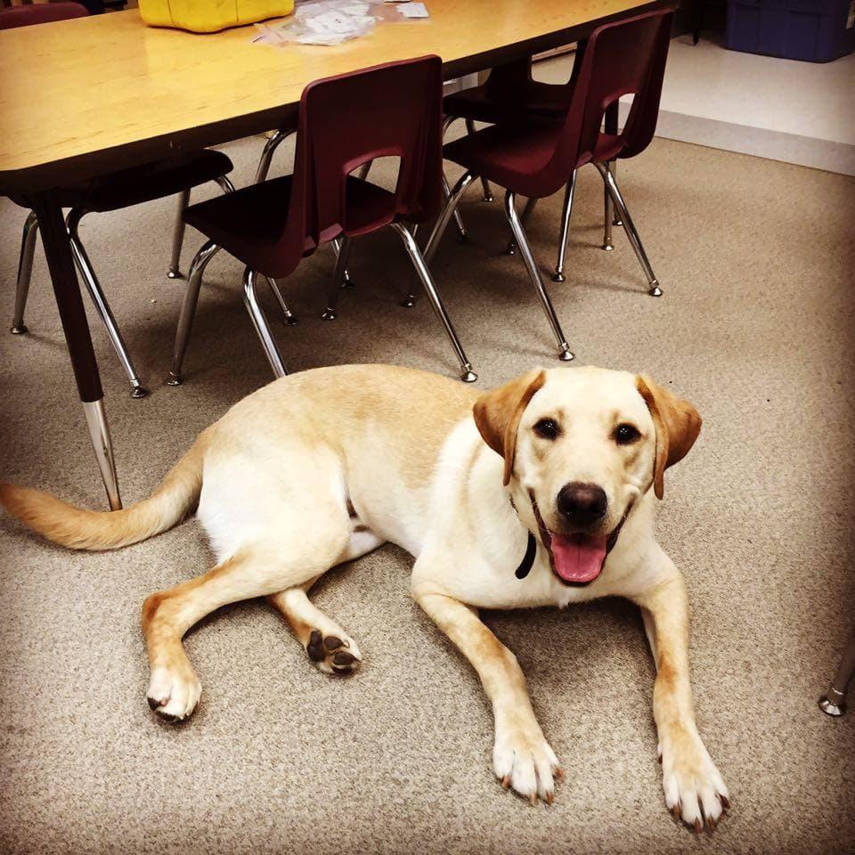 Wonka, a dog working at school
