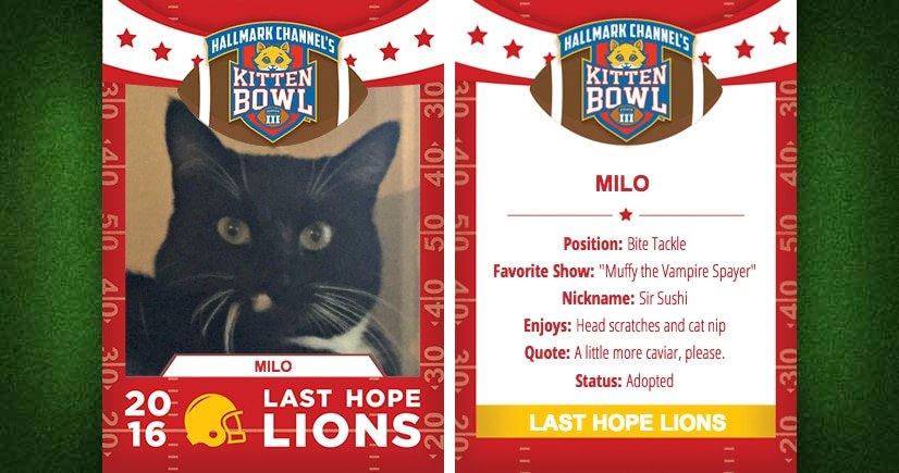 Milo Cate-Lete Card