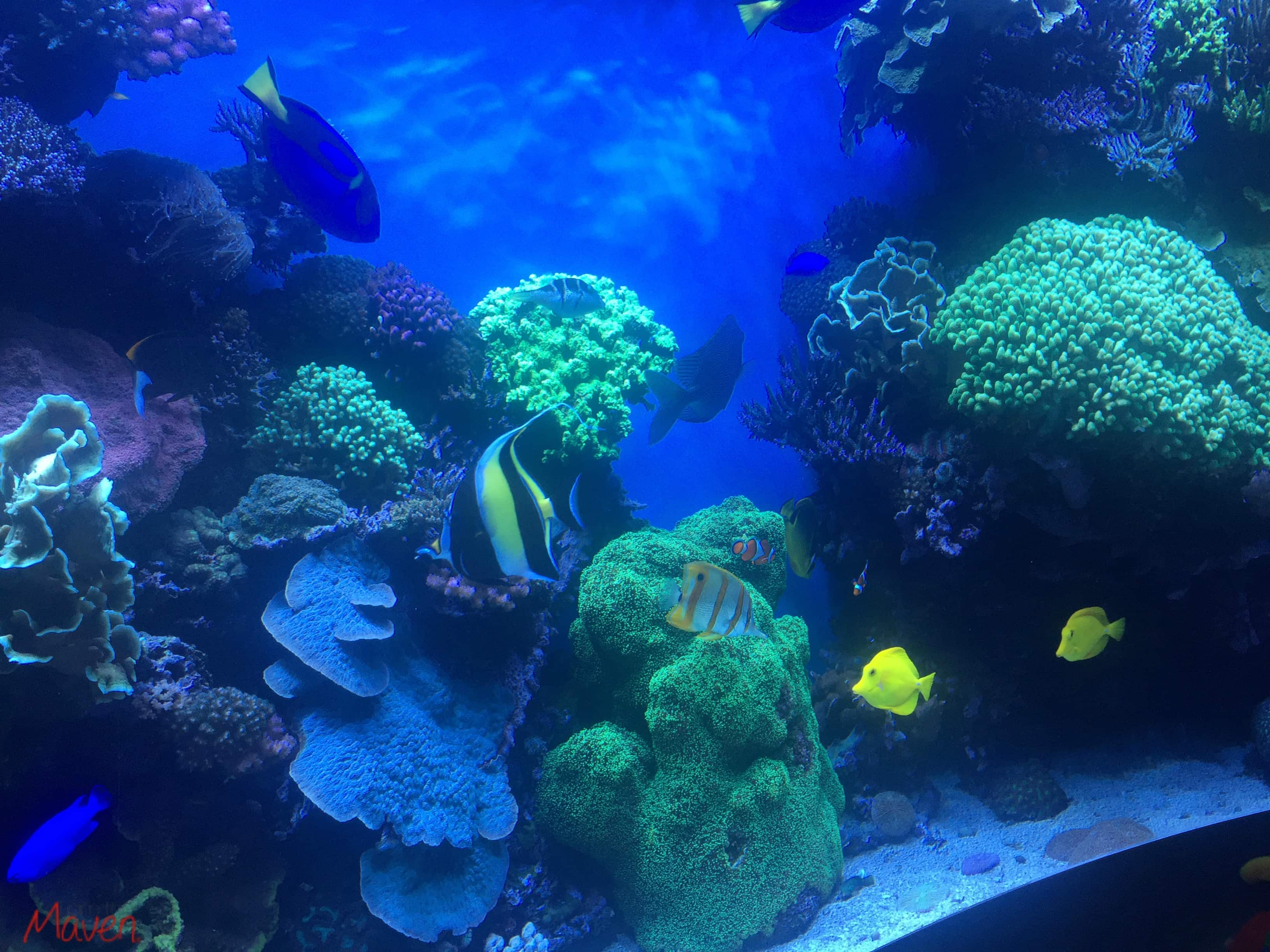 Finding Dory at the Monterey Bay Aquarium #HaveYouSeenHer
