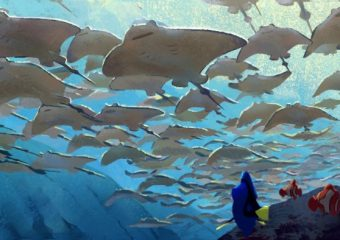10 Facts About Finding Dory