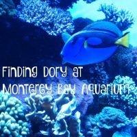 Finding Dory at Monterey Bay Aquarium
