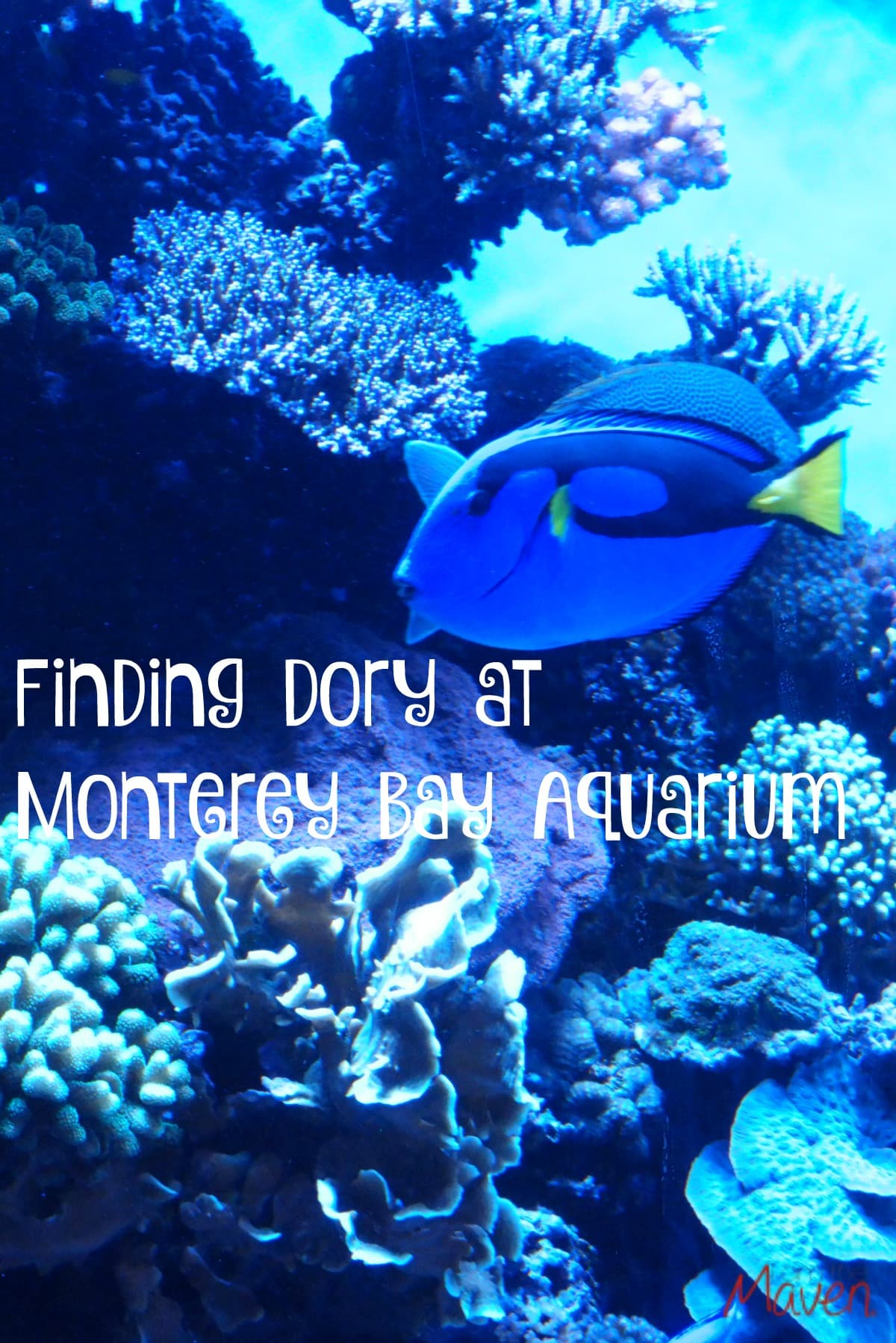 Finding Dory at Monterey Bay Aquarium #FindingDory #HaveYouSeenHer #FindingDoryEvent