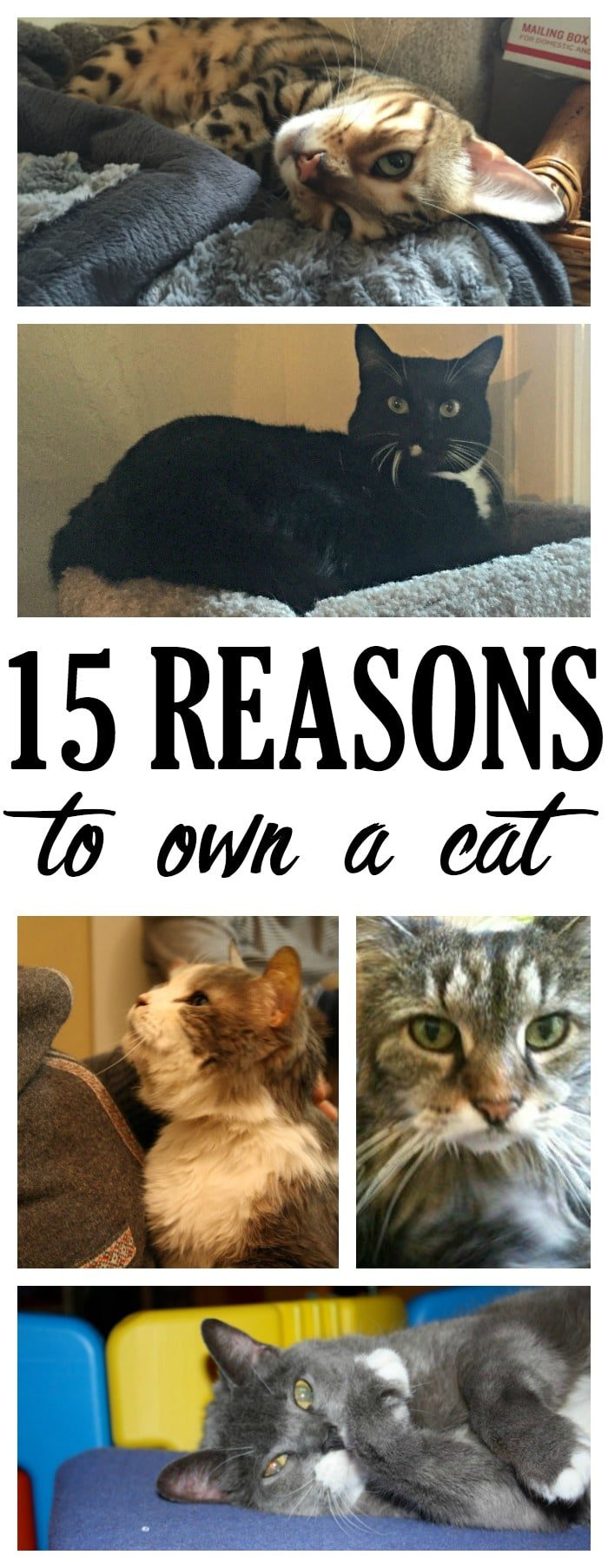 Cats are amazing creatures, and there are so many reasons to own a cat.