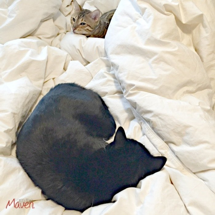 Cozy Kitties #PerfectPortions ad