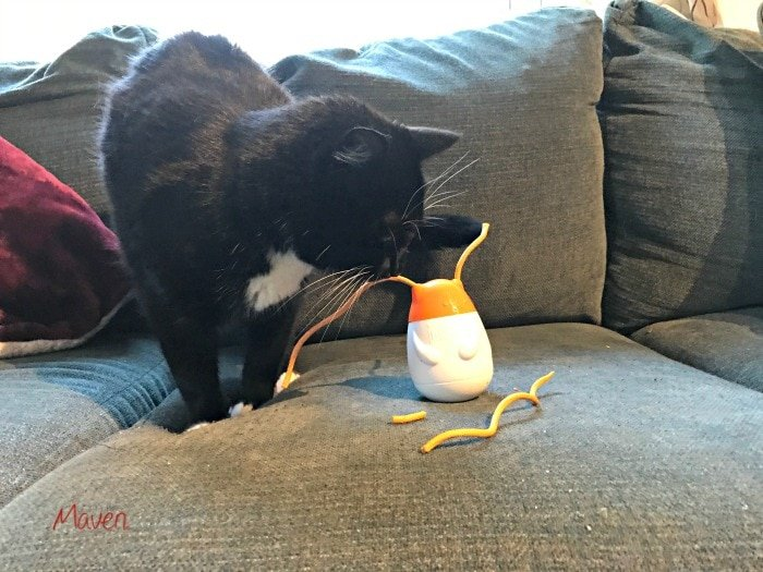 Milo shows how to spoil your cat with a Pull N Play