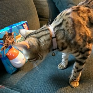 Spoil Your Cat With a Pull N Play Wobbert and Ropes #MostPlayfulCat