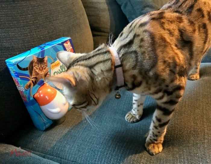 Spoil your cat with a Pull N Play!