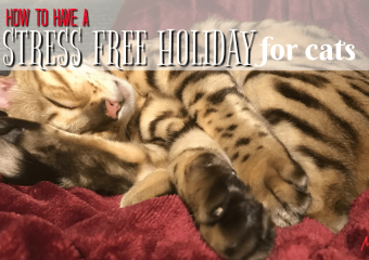 How to have a stress free holiday for cats! #CLUMPandSEAL
