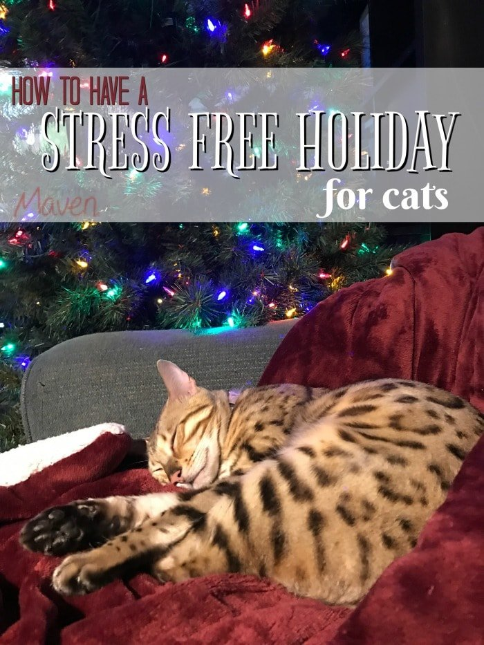 If you're a cat owner don't miss how to have a stress free holiday for cats. ad