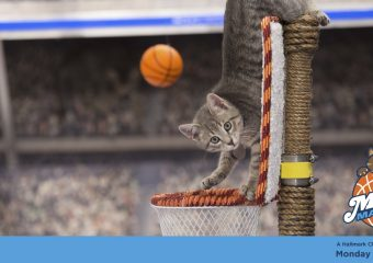 """The Road to """"The Final Fur"""" on Hallmark Channel Monday, April 3rd  8/7c! #MeowMadness"""