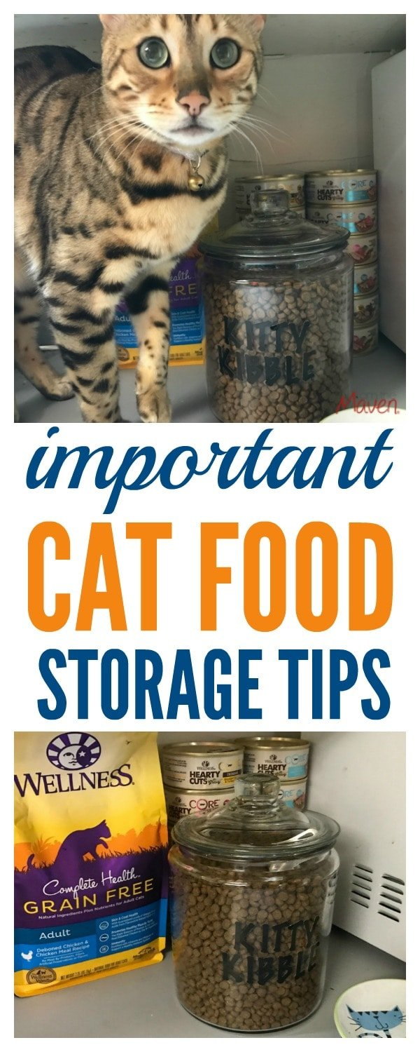 Love your cat? Don't miss these important cat food storage tips! ad