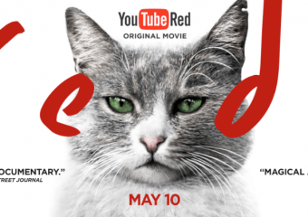 Kedi is on YouTube Red Today, May 10th!