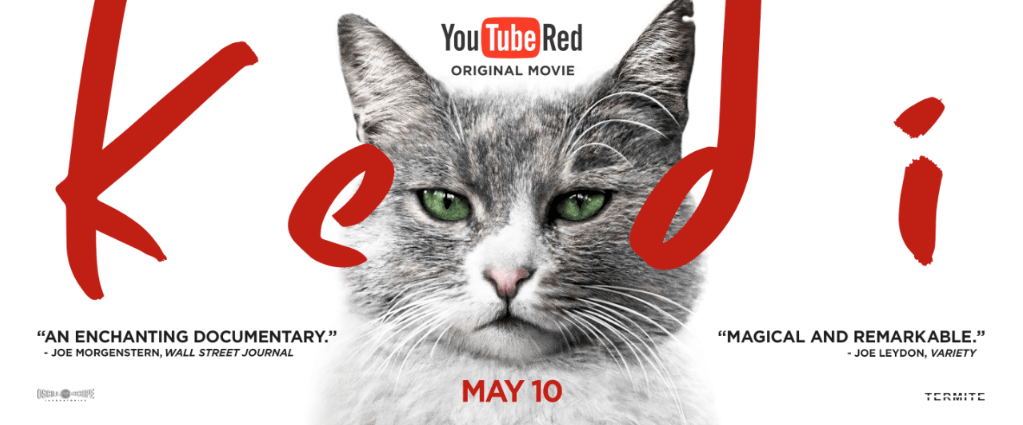 Kedi Istanbul cat