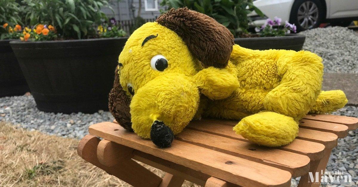 little yellow dog
