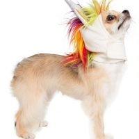Unicorn dog costume